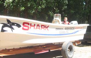Camping Shark